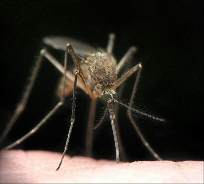 ТОП 9 самых опасных насекомых в мире